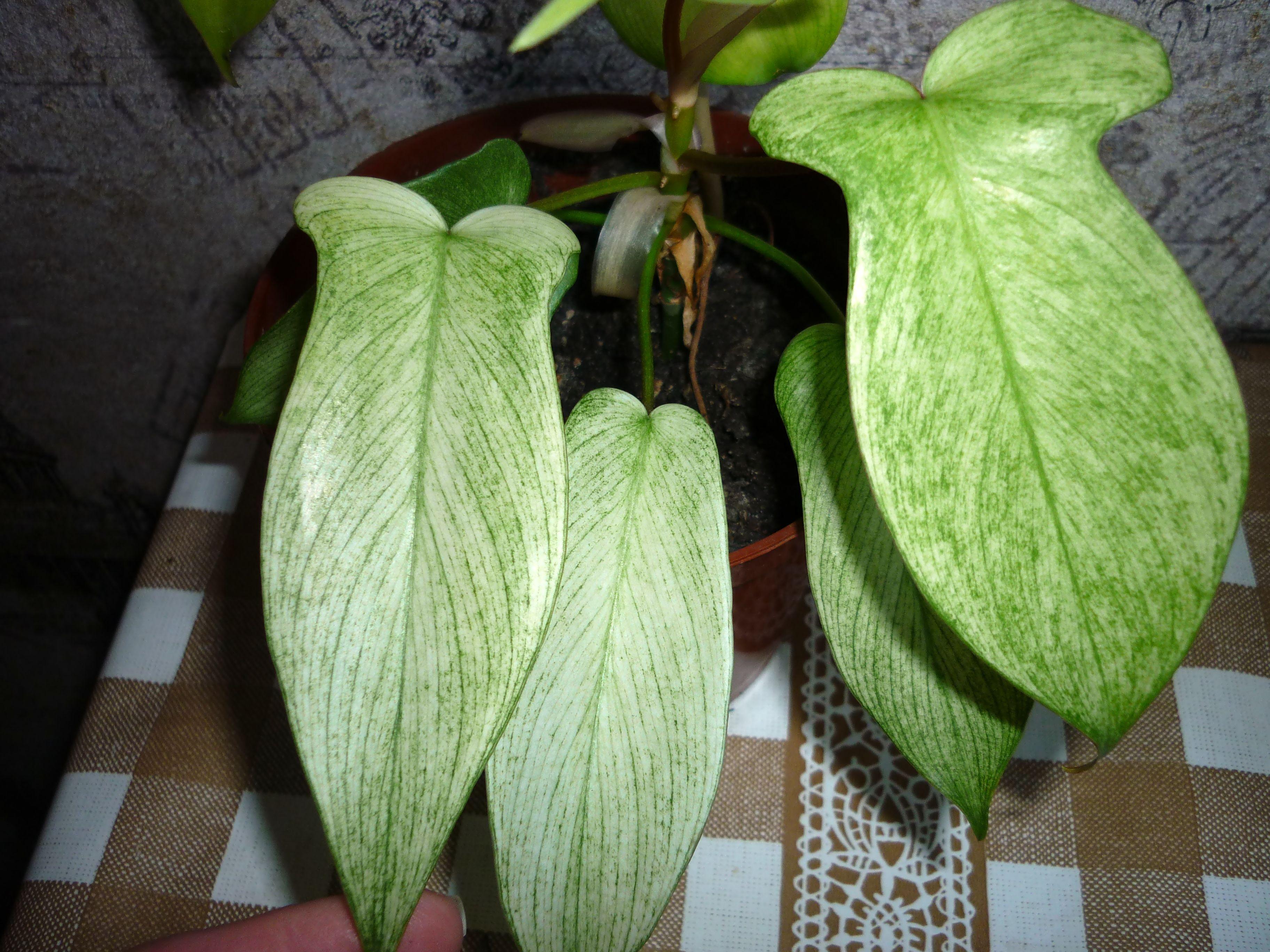 Комнатные кактусы и суккуленты  каталог с фото и